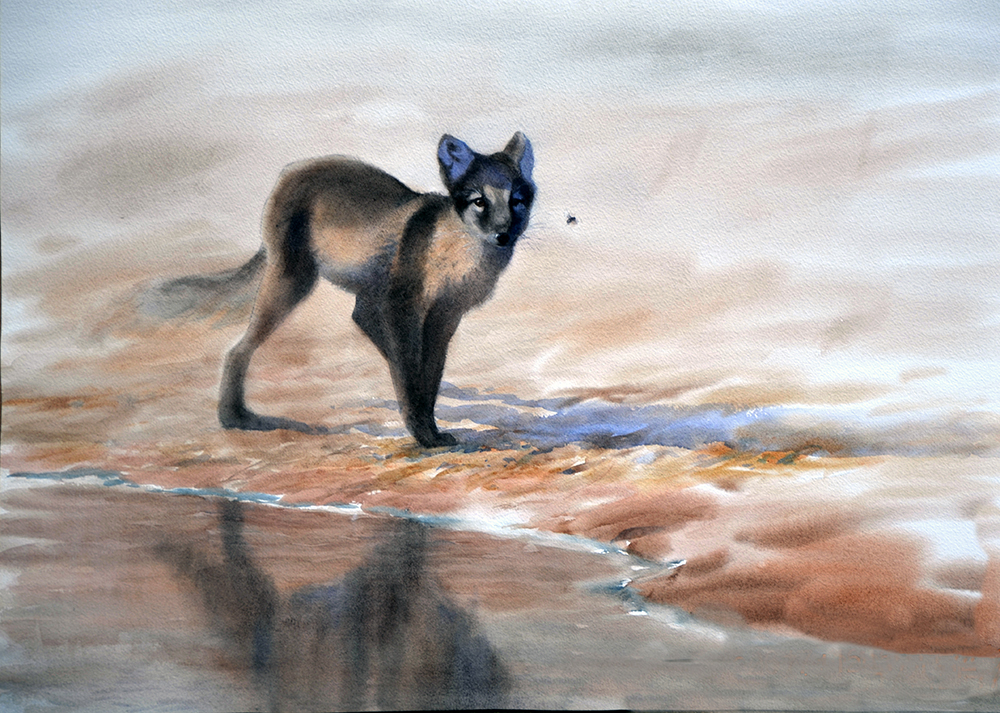 Arctic fox and fly