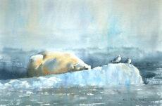Isbjörn. Gicléetryck A4 efter akvarell. Oinramad 900 kr.