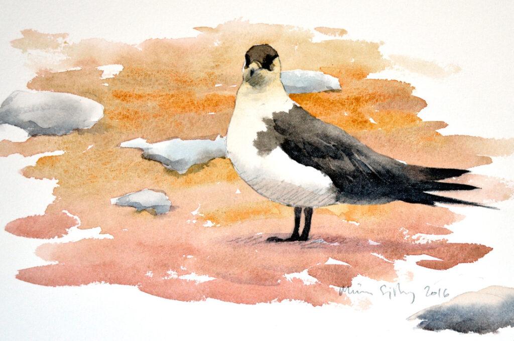Arctic skua