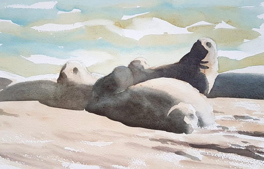 Grey seal sketch