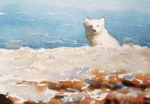 Arctic fox at Svalbard